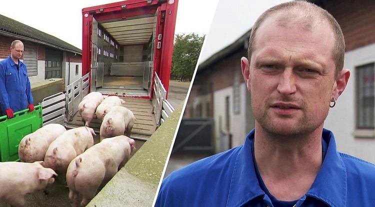 Indslag i TV2 Nord om dyretransportchaufførerne